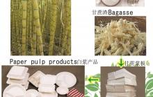 生態植物纖維餐具