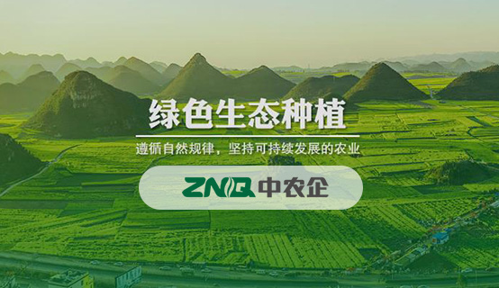 中农企农业控股集团(深圳)有限公司